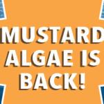 M.Algae_Feature Image_2019